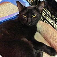 Adopt A Pet :: MICKIEE - Diamond Bar, CA