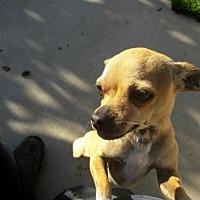 Adopt A Pet :: Happy - Richmond, CA