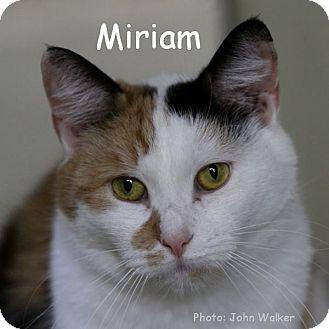 Domestic Shorthair Cat for adoption in Warwick, New York - Miriam