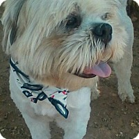 Adopt A Pet :: Chewy- ADOPTED 9/17/17! - Apple Valley, CA
