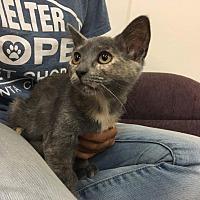 Adopt A Pet :: Vail - Valencia, CA