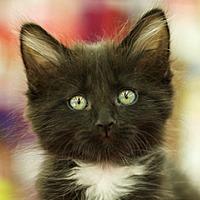Adopt A Pet :: Kodak - Great Falls, MT