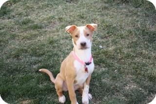 Cattle Dog Mix Dog for adoption in Las Vegas, Nevada - Stella