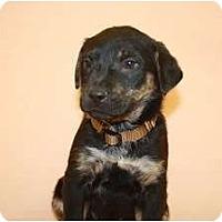 Adopt A Pet :: Mustard - Broomfield, CO