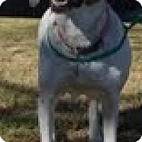Adopt A Pet :: Miracle - justin, TX
