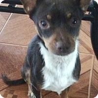Adopt A Pet :: Brady - geneva, FL