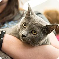 Adopt A Pet :: Zara - Fort Wayne, IN