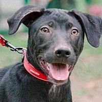 Adopt A Pet :: Hachi - San Ramon, CA