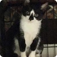 Adopt A Pet :: Rosey - East Brunswick, NJ