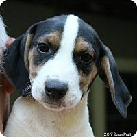 Adopt A Pet :: Murphy - Bedford, VA