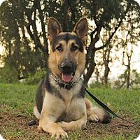 Adopt A Pet :: Keaton - Laguna Niguel, CA