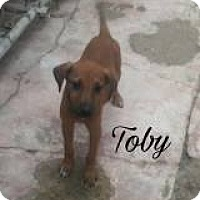 Adopt A Pet :: Toby - Rexford, NY