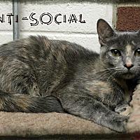 Adopt A Pet :: Anti-Social - Euclid, OH
