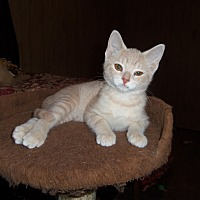 Adopt A Pet :: HOBY - Medford, WI