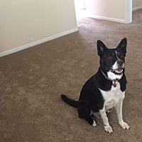 Adopt A Pet :: JoJo - Hayward, CA