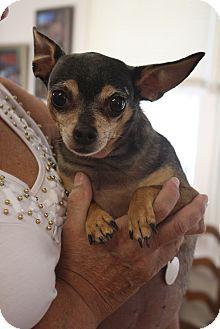 Chihuahua Mix Dog for adoption in Huntsville, Alabama - Chunk