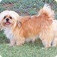 Adopt A Pet :: Ethel - San Angelo, TX