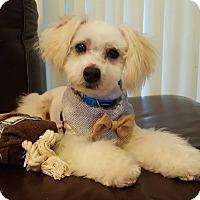 Adopt A Pet :: Marvin - La Mirada, CA