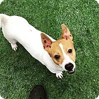 Adopt A Pet :: Spanky - Hamilton, ON