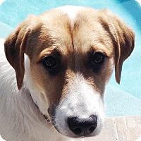 Adopt A Pet :: Booth - Orlando, FL