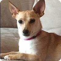 Adopt A Pet :: Ripley - Beavercreek, OH