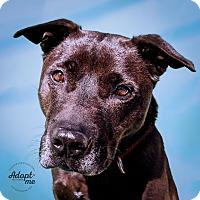 Adopt A Pet :: Tai - Long Beach, NY