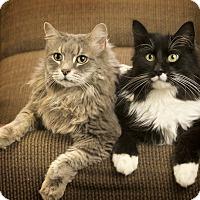 Adopt A Pet :: Tweak - Anchorage, AK