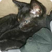 Adopt A Pet :: ROBIN - detroit, MI