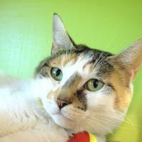 Adopt A Pet :: Holly - Stanwood, WA