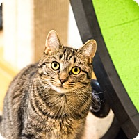 Adopt A Pet :: Alonzo-FEE WAIVED - Seville, OH