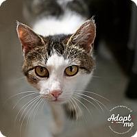 Adopt A Pet :: Rose - Lyons, NY