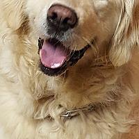 Adopt A Pet :: Morgan - Washington, DC