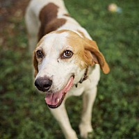 Adopt A Pet :: Jeptham is reduced! - Washington, DC