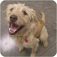 Adopt A Pet :: Rigley - Phoenix, AZ