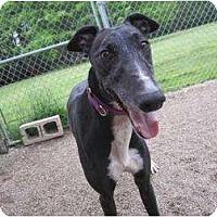 Adopt A Pet :: Mama (Got It From Mama) - Chagrin Falls, OH