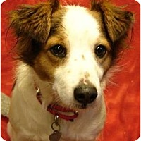 Adopt A Pet :: Winston - Afton, TN