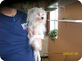 Chinese Crested Mix Dog for adoption in Newburgh, Indiana - Benji