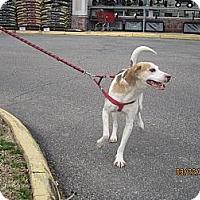 Adopt A Pet :: Bubba - Chesterfield, VA