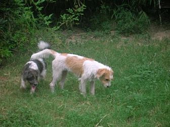 Terrier (Unknown Type, Medium) Mix Dog for adoption in Baton Rouge, Louisiana - Mickey & Millie