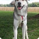 Adopt A Pet :: CHARLIE BOY