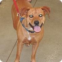Adopt A Pet :: Princess - Ormond Beach, FL