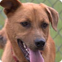 Adopt A Pet :: Gus - Warner Robins, GA