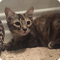 Adopt A Pet :: Safari - LaGrange Park, IL