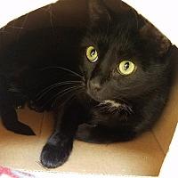 Adopt A Pet :: Matilda - Red Wing, MN