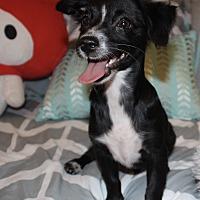 Adopt A Pet :: Nemo - Santa Monica, CA