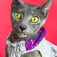 Adopt A Pet :: Serenity - Monroe, LA