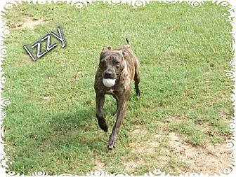 Bull Terrier/Labrador Retriever Mix Dog for adoption in Ozark, Alabama - Izzy