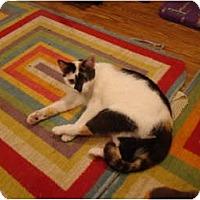 Adopt A Pet :: Cleo - Muncie, IN