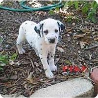 Adopt A Pet :: Pike - League City, TX