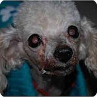Adopt A Pet :: Jay - Chandler, AZ